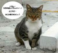 (= ・ェ・ =)にゃんこちゃん ( 2009 may )