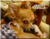 ・・・・・ネムネムU( ノω・` )U