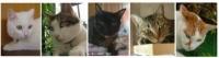 5猫さん一列