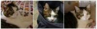 ちびが3猫