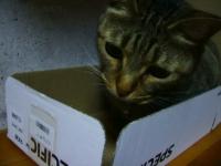 箱にはいる福
