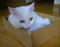 箱のなかのチロ