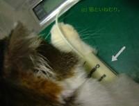 前脚での測定